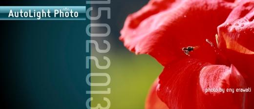 AutoLight Theory macro photography