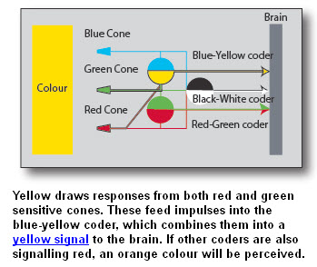 Hering_blue yellow signal coder